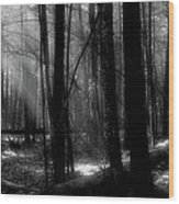 Forest Light In Black And White Wood Print