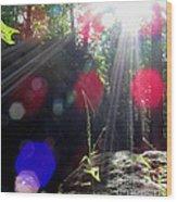 Forest Lightscape Wood Print