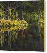 131005b-044 Forest Marsh 1 Wood Print