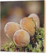 Forest Mushrooms Wood Print