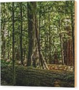 Forest Of Cathedral Grove Collection 1 Wood Print
