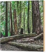 Forest Of Cathedral Grove Collection 2 Wood Print