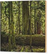 Forest Of Cathedral Grove Collection 3 Wood Print