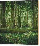Forest Of Cathedral Grove Collection 7 Wood Print
