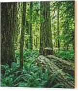 Forest Of Cathedral Grove Collection 8 Wood Print