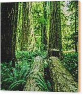 Forest Of Cathedral Grove Collection 9 Wood Print