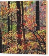 Color The Forest Wood Print