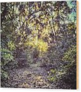 Forest Of Light Wood Print