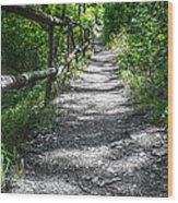 Forest Path Wood Print by Dobromir Dobrinov
