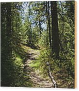 Forest Path In Spokane 2014 Wood Print