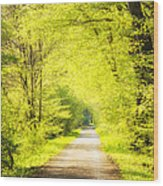 Forest Path In Spring With Bright Green Trees Wood Print