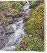 Forest Rapids Wood Print