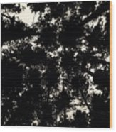 Forest Sky Wood Print