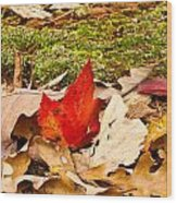 Forest Still Life 5 Wood Print