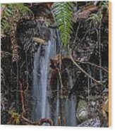 Forest Streamlet Wood Print