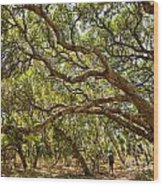 Forest Stroll - The Magical And Mysterious Trees Of The Los Osos Oak Reserve. Wood Print