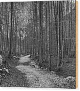 Forest Trail Bw Wood Print