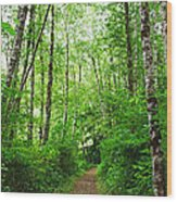 Forest Trail To Follow Wood Print