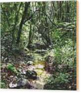 Forest Tranquility Wood Print