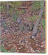 Forest Trickle Wood Print