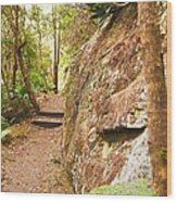 Forest Walk 15 Wood Print