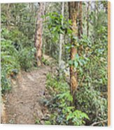 Forest Walk 17 Wood Print