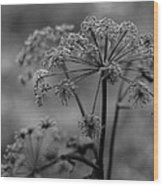 Forest Wild Flowers Wood Print