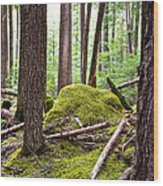 Forest With Moss-covered Rocks Along John's Lake Trail In Glacier Np-mt Wood Print