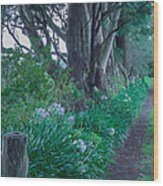 Forested Path Wood Print
