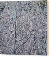 Forests Of Frost Wood Print