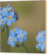 Forget Me Not 01 - S01r Wood Print