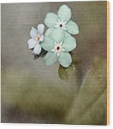 Forget Me Not 03 - S07bt07 Wood Print