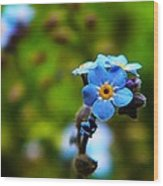 Forget Me Not Bloom Wood Print