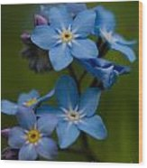 Forget Me Not Flower Wood Print