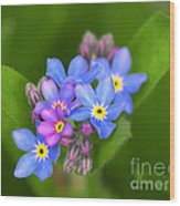 Forget-me-not Stylized Wood Print