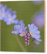 Forget Me Nots Wood Print