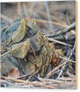 Forgotten Pine Cone Wood Print