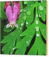 Formosa Bleeding Heart On Ferns Wood Print