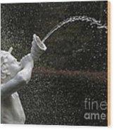 Forsyth Fountain Closeup Wood Print