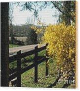 Forsythia Along The Highway Wood Print