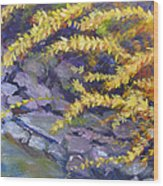 Forsythia Creek Wood Print