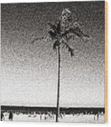 Fort Lauderdale Palm Tree Wood Print