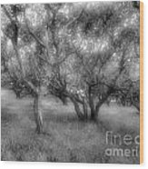 Fort Ord Ca Oaks Wood Print