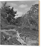 Fort Ord Texture Wood Print