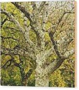 Fort Worth Japanese Gardens-041 Wood Print