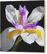 Fortnight Lily Wood Print