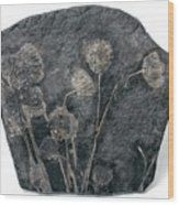 Fossil Crinoids Wood Print