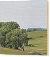 Fossil Prairie Panoramic 3 Wood Print