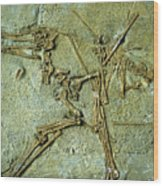Fossil Remains Of The Pterodactyl Wood Print
