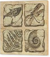 Fossils Wood Print by JQ Licensing
